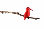 De Rode Ijsvogel